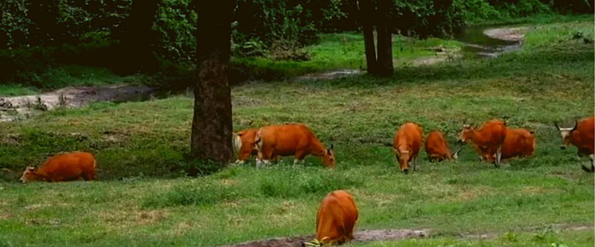 wisata-taman-nasional-baluran-jawa-timur